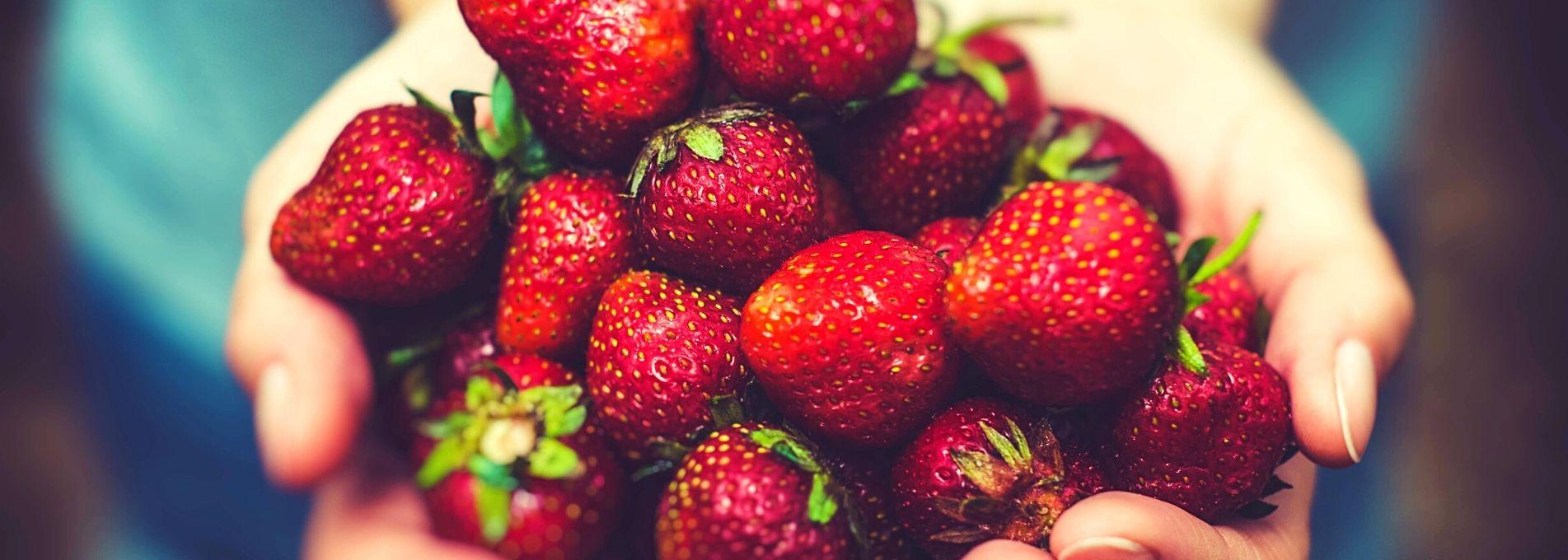 La fraise bio et française de retour !