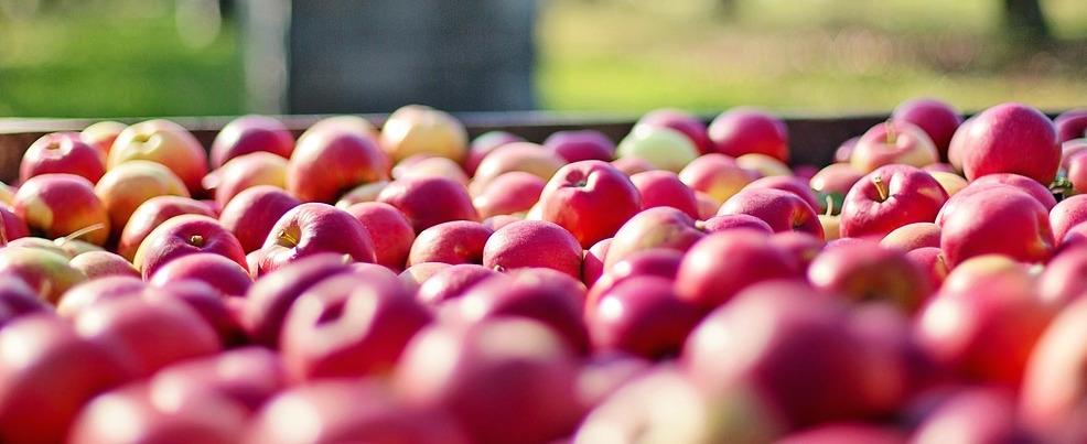 1543843701_apples-1004886_1280.jpg