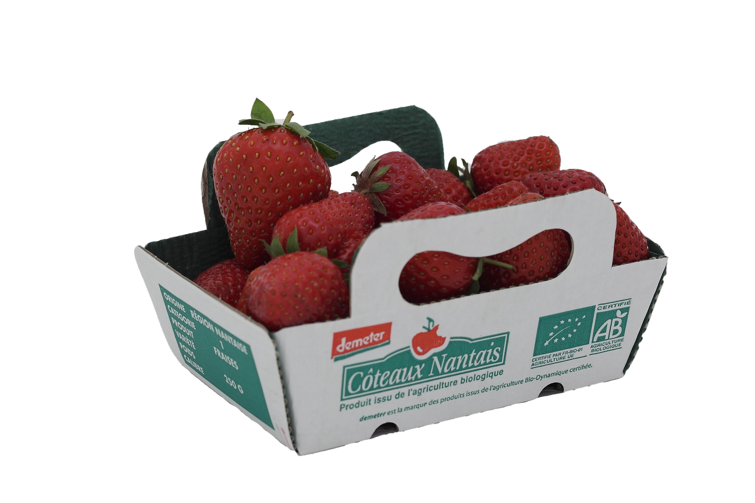 Barquette fraises Côteaux Nantais