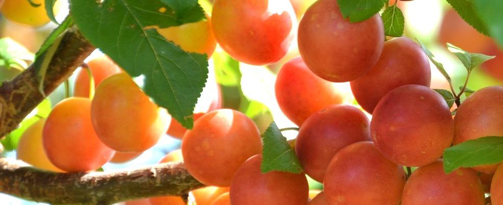 1568535184_fruit-4393618_1920.jpg