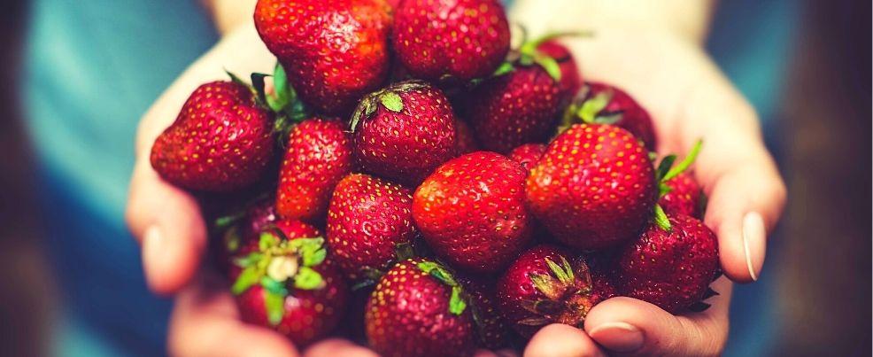 1614854188_fraisesbiocn.jpg