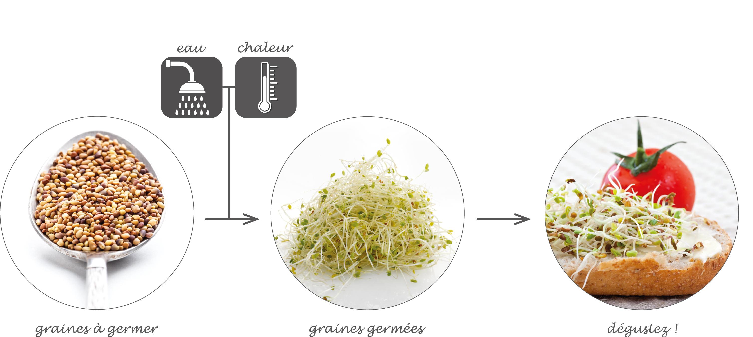 La germination selon Germline