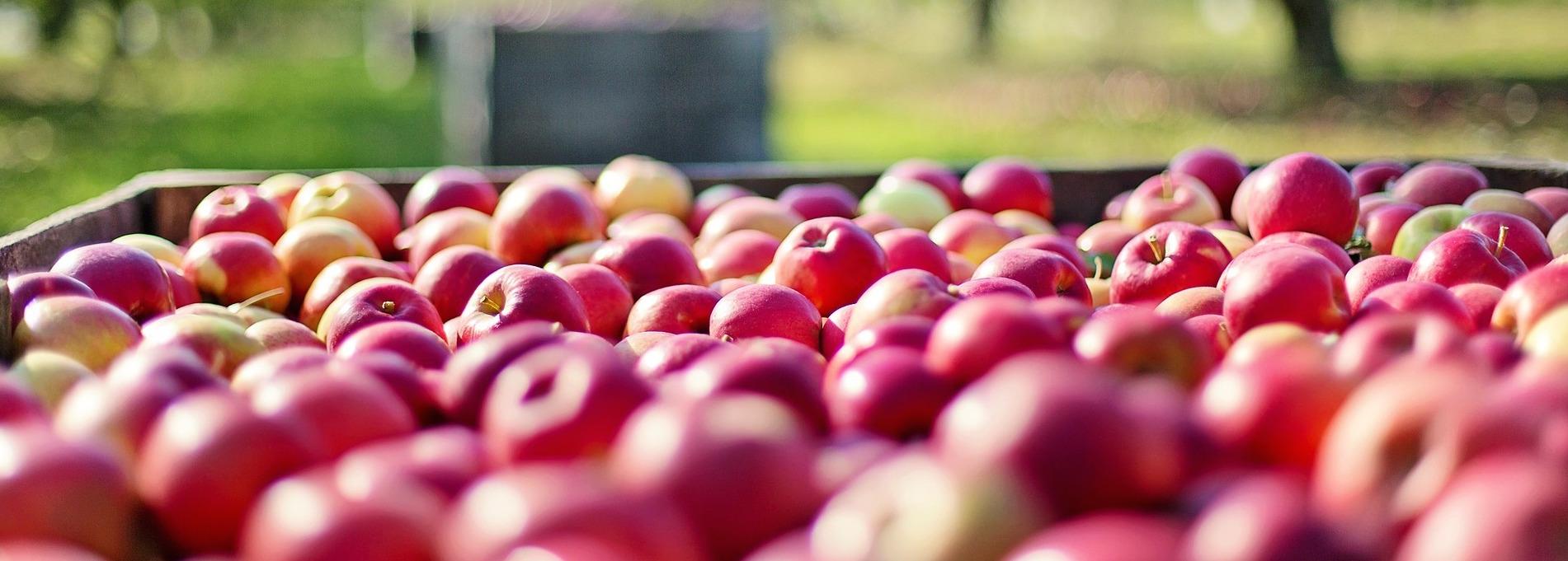 POMMES BIO : de nouvelles variétés à partir de janvier