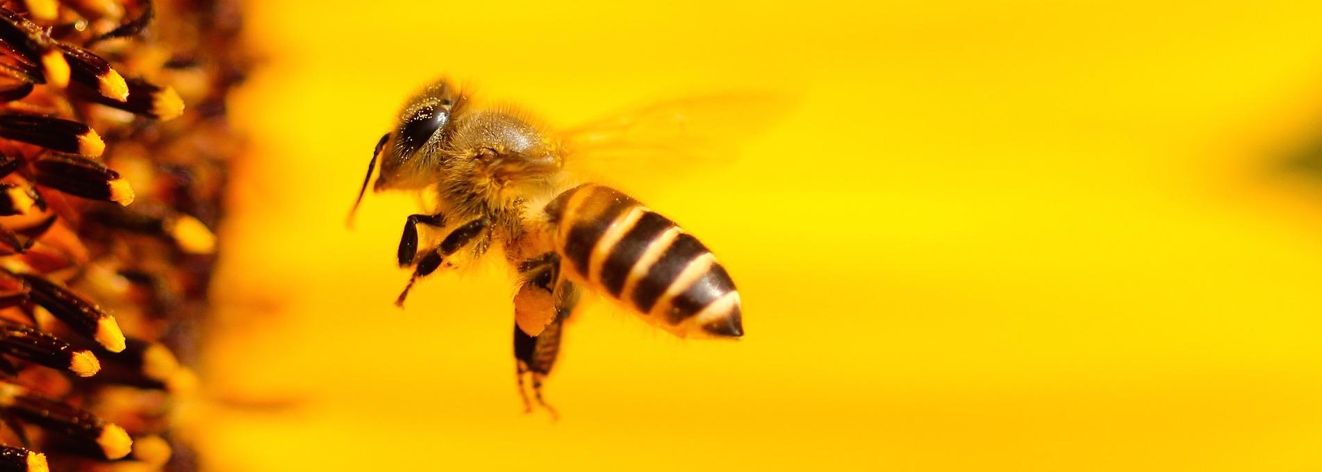 Les abeilles et la biodynamie