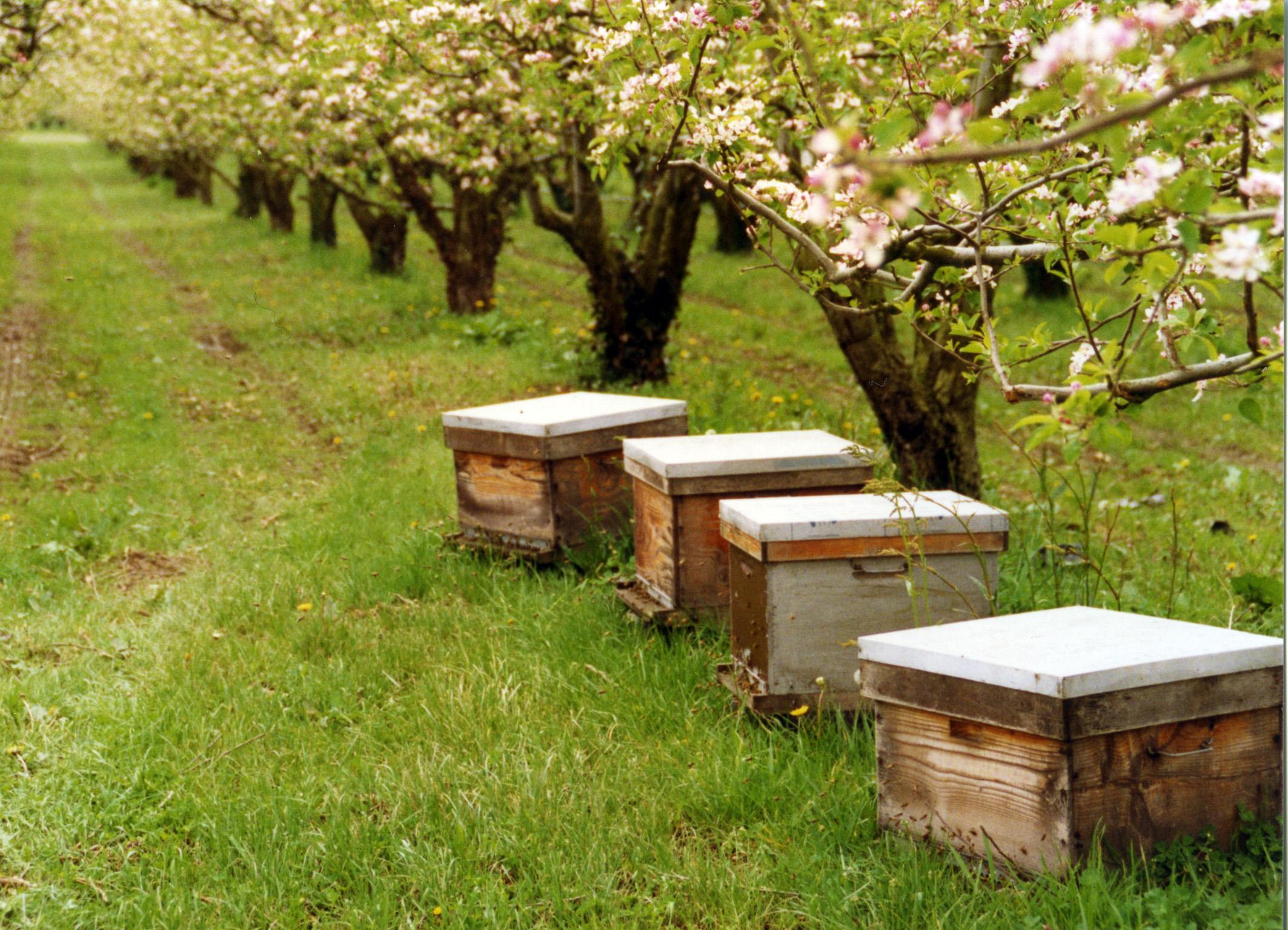 Photo des ruches