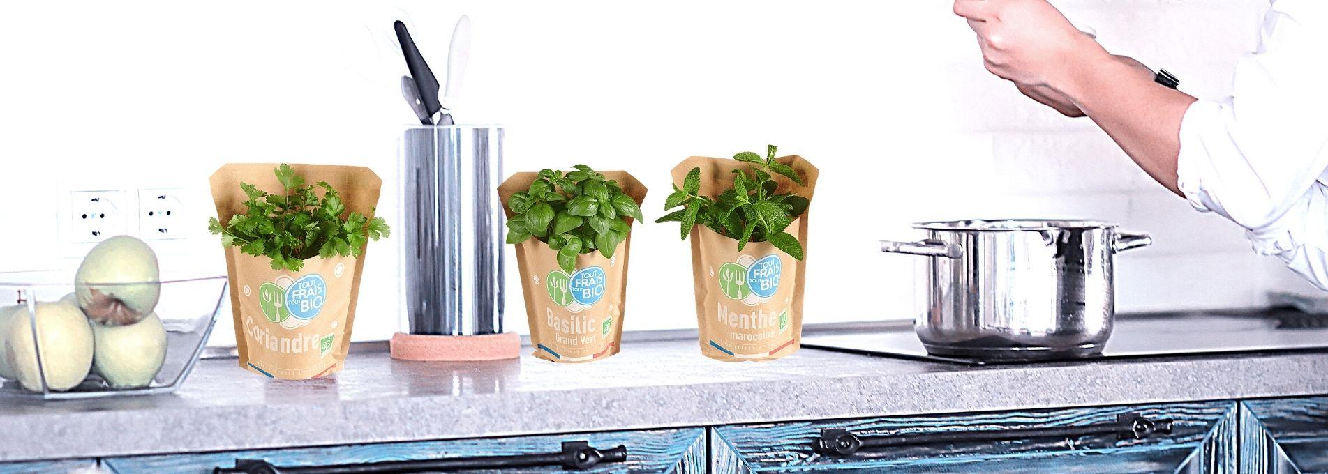 Sublimer ses plats grâce aux herbes aromatiques bio