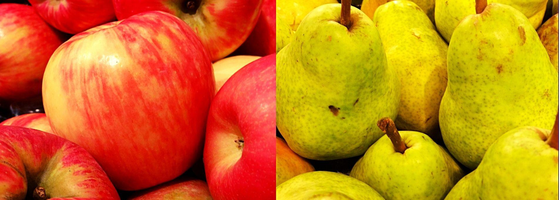 Pommes et poires : des variétés qui éveillent la curiosité !
