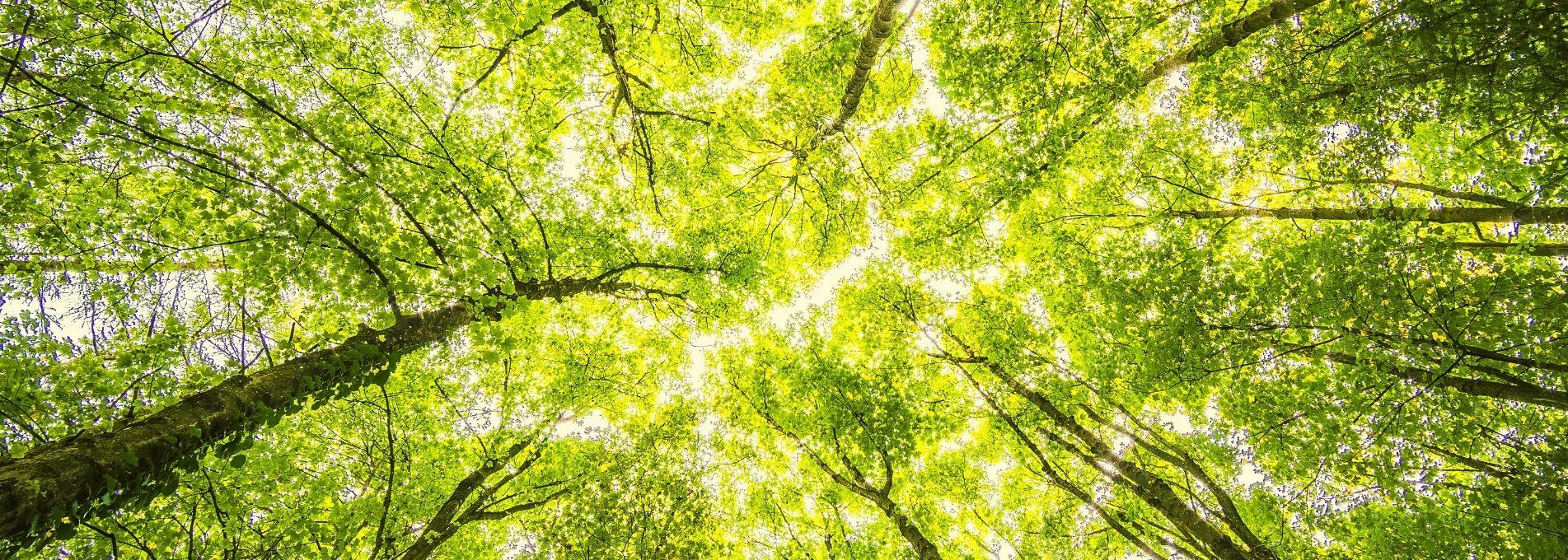 Le CRPF dynamise la forêt privée